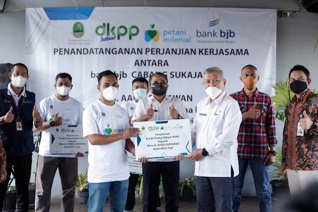 Bank bjb dan Kelompok Ternak Haji Aang Gunawan Tandatangani PKS Budidaya Penggemukan Sapi