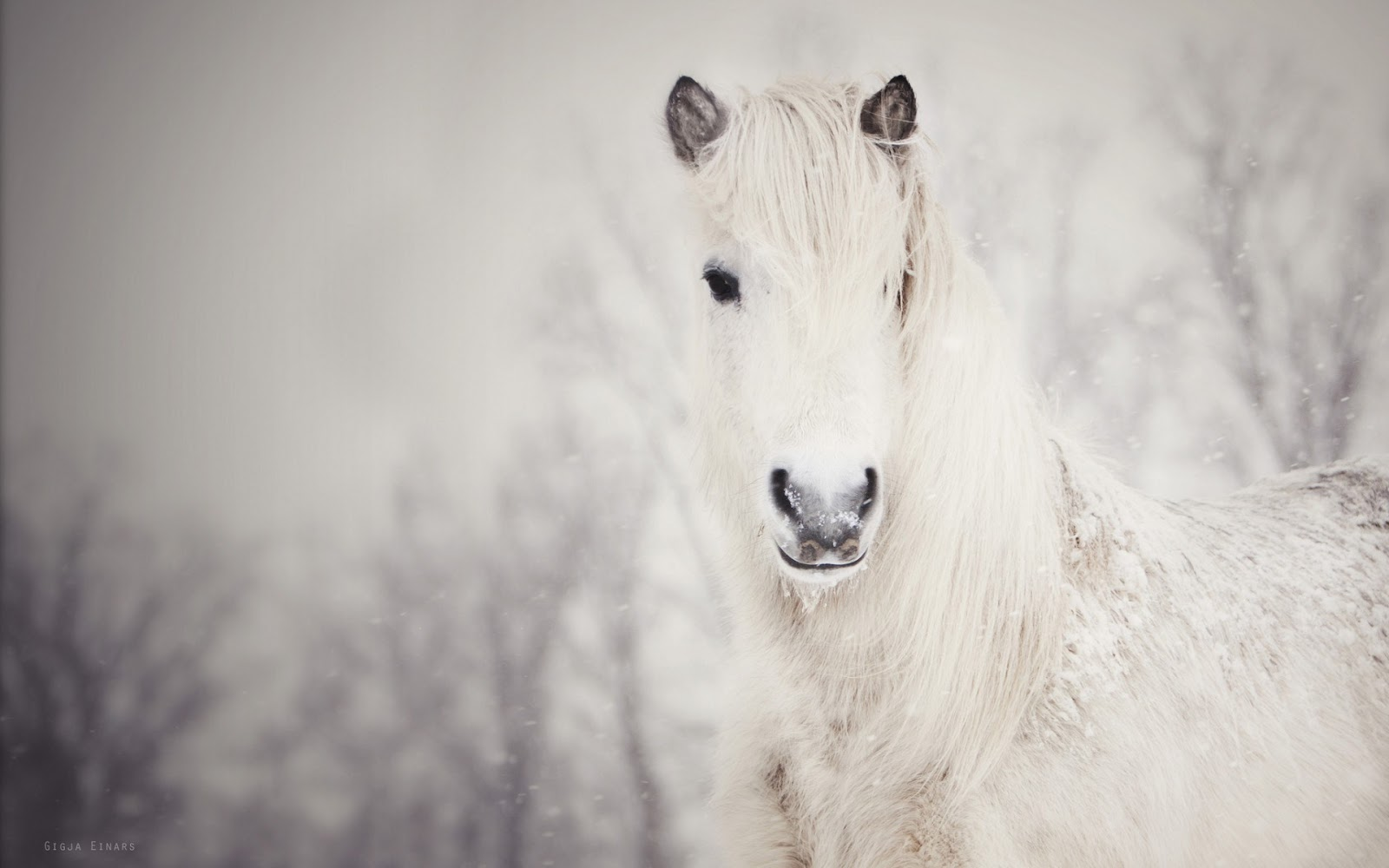 Good   Wallpaper Horse Winter - beauty-horse-winter-snow-photo-wallpaper-1920x1200  Snapshot_545458.jpg