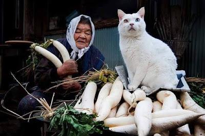 Amore per i gatti