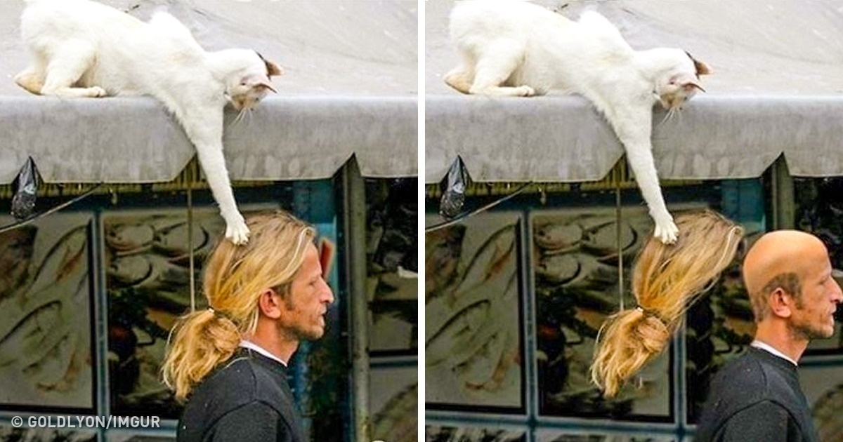 24 Funny And Adorable Pictures That Put A Smile On Our Faces