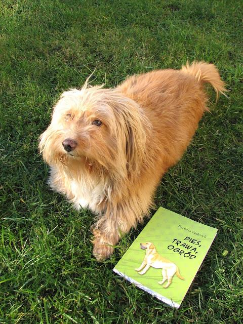 książka pies, trawa, ogród, ogród przydomowy