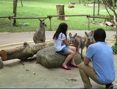 Singapura Wisata