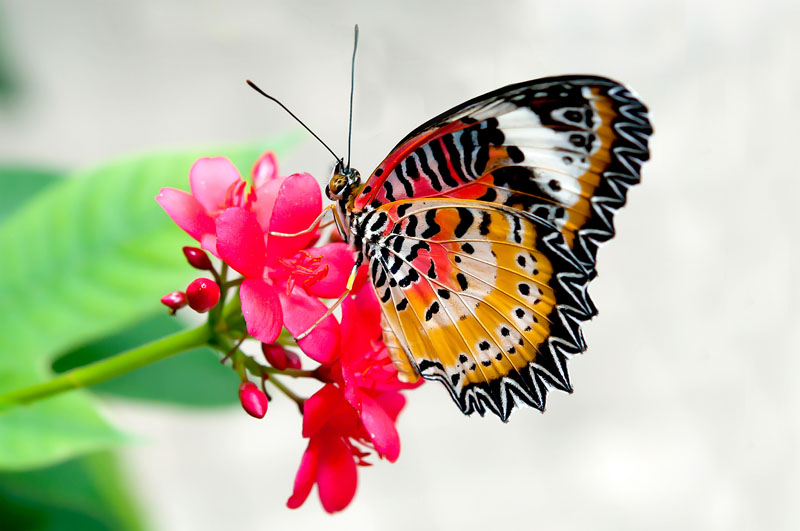 Best Colourful And Beautiful Butterfly Wallpapers Download Free For