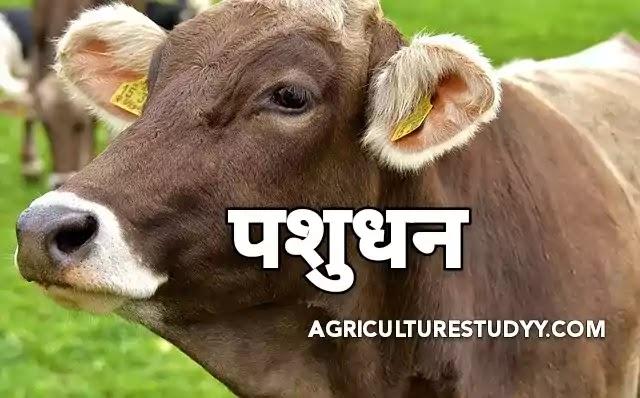 पशुधन (livestock in hindi) क्या है, इसके लाभ एवं कृषि में पशुधन का क्या महत्व है