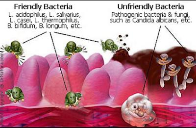 Contoh Bakteri Yang Menguntungkan dan Merugikan
