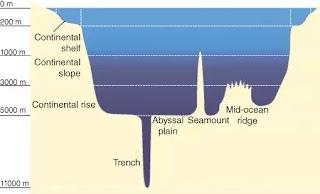 2. Potongan melintang diagram cekungan laut.  Di tepi luar landas kontinen, dasar samudera turun dengan tiba-tiba dan curam untuk membentukkemiringan benua, yang memanjang hingga kedalaman 2-3 kilometer. Kemiringan benua kemudian membericara menuju kenaikan benua yang lebih landai yang turun satu kilometer atau lebih untuk bergabung dengan ahamparan luas dasar datar, lunak, samudera — dataran abyssal — yang membentang di kedalaman sekitar 4–6kilometer dan menyumbang sekitar 76 persen dari dasar Samudra Global.