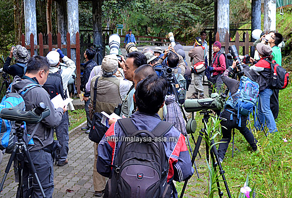 Birding at Kinabalu National Park