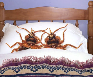 Kilohana K9s Official Blog Store Bought Bed Bug Bombs