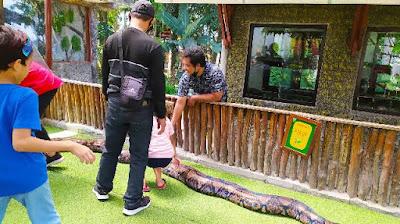 Koleksi-reptil-bhumi-merapi