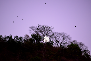 violet sky, vultures and moonrise