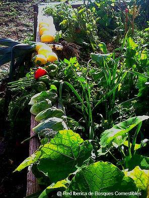 Jardinería y Paisajismo Comestible, diseño y construcción de Jardines Comestibles