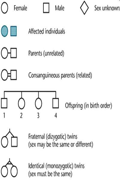 Pedigree analysis basic symbols
