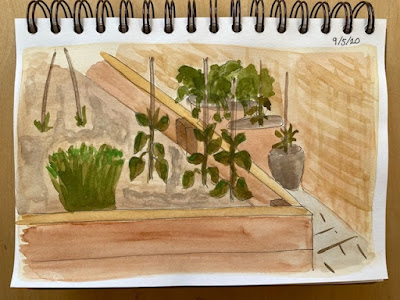 Sketchbook page - watercolour vegetable patch