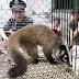 ΣΤΗΝ ΓΟΥΧΑΝ! Χιλιάδες άγρια ζώα πωλήθηκαν πριν ξεσπάσει η πανδημία