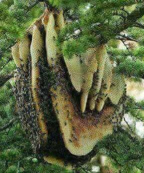 mật ong rừng daklak