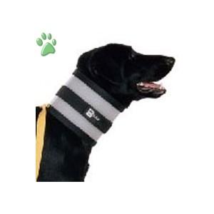 colar canino