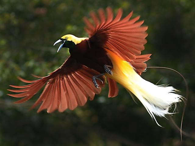 Persebaran Flora Dan Fauna Dunia Porosilmu Com