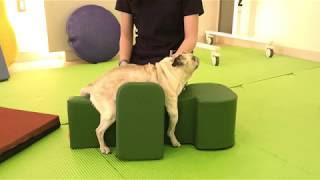 lesões cerebrais em cães