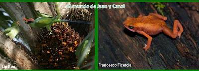 http://juanpuchefernandez.blogspot.com/2016/04/extincion-de-especies.html