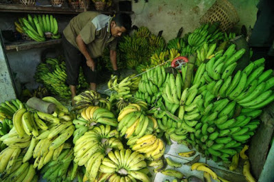 prospek pasar pisang indonesia