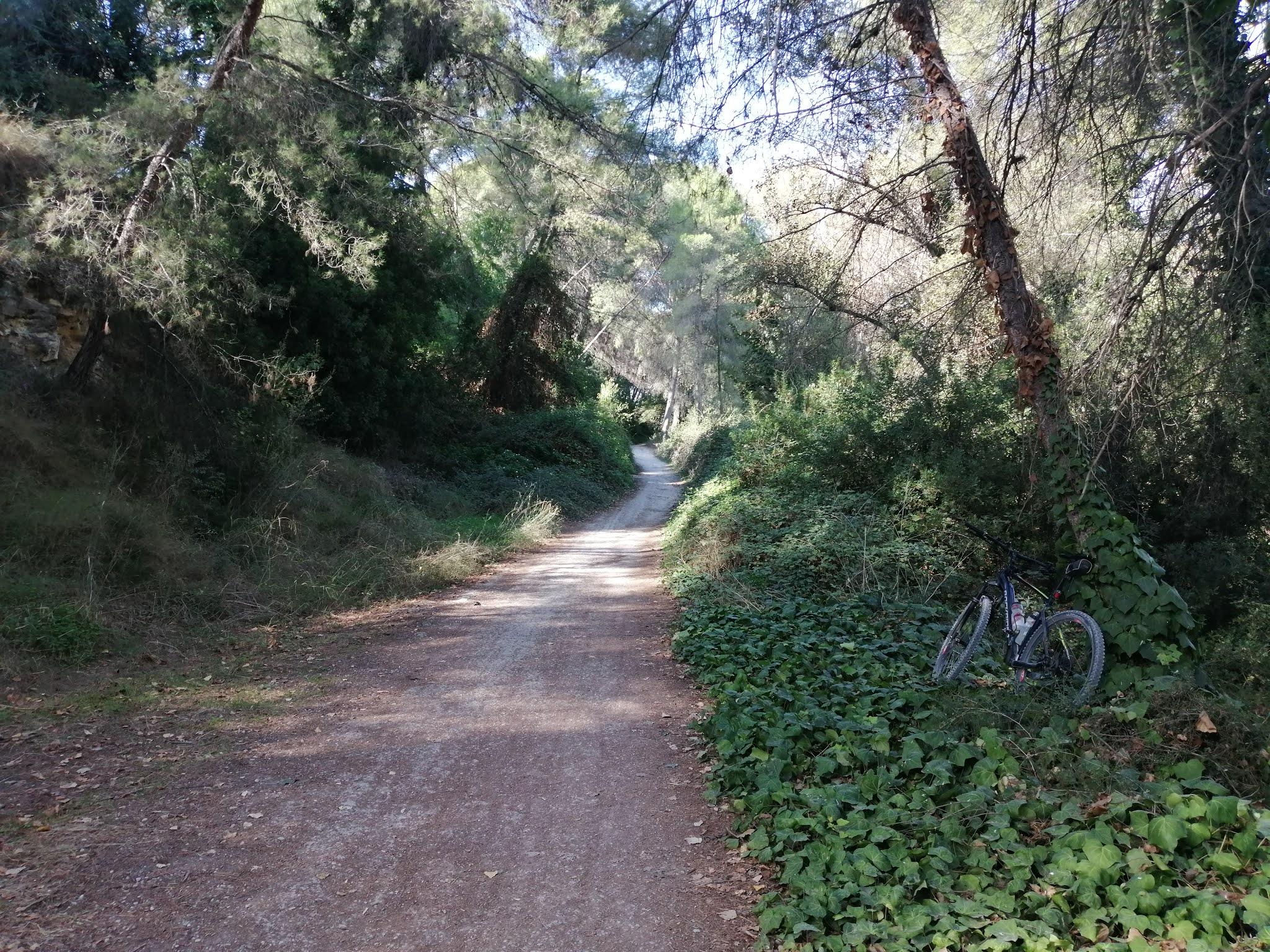 Dense vegetation on the River Turia Natural Park trail, Valencia