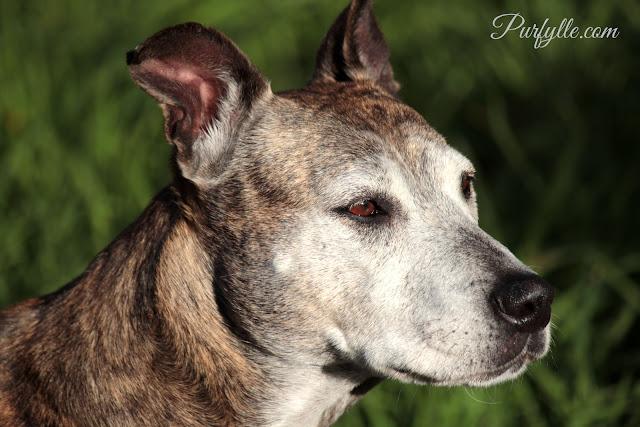Geri The Wonder Dog