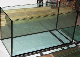 Aquarium Pembesaran Ikan Cupang
