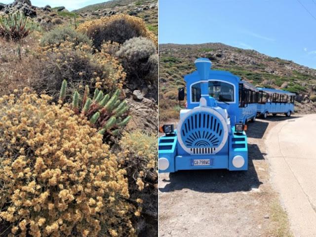 trenino visita Asinara