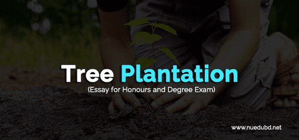 Tree Plantation - Important Essay for Honours Exam