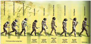 Manusi Purba Pertama Di Indonesia beserta Penemunya