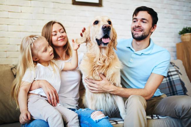 Jak opiekować się psem?