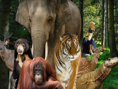 Selayang Pandang - Sejarah Dan Informasi Kebun Binatang Ragunan Jakarta