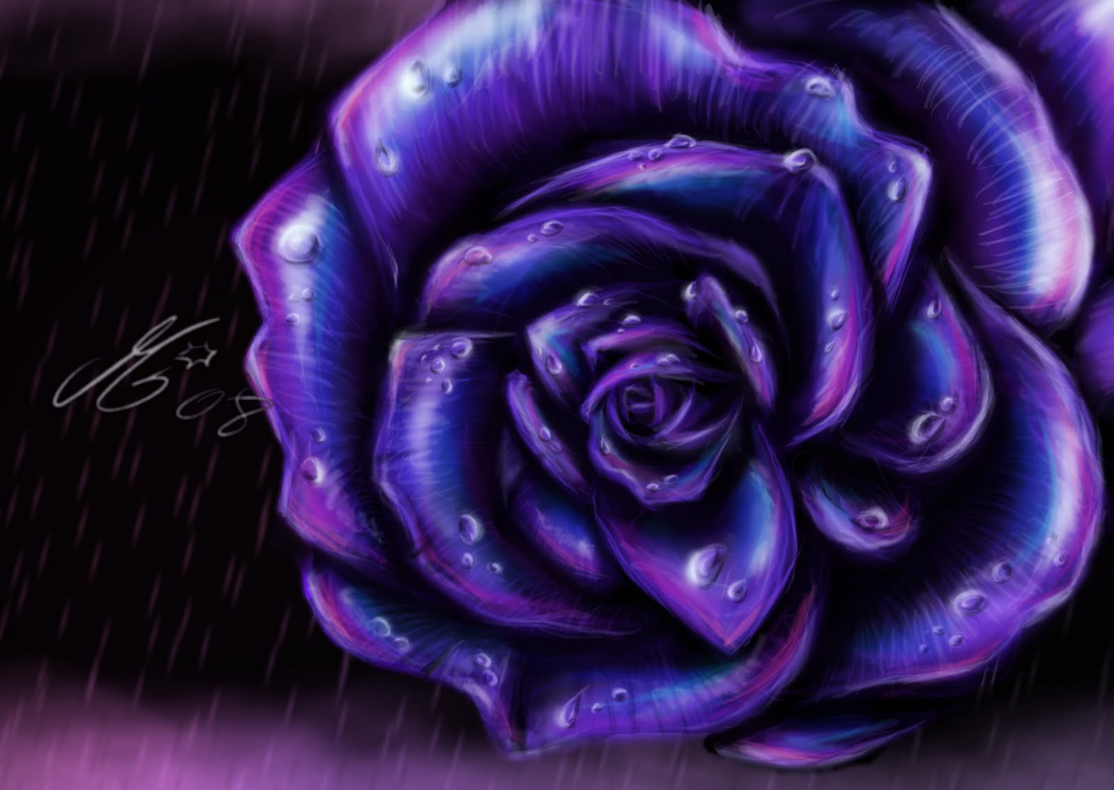 wallpapers of purple roses - photo #5