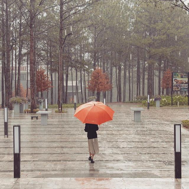 Lang thang phố núi Đà Lạt những ngày tháng 6 mưa dầm