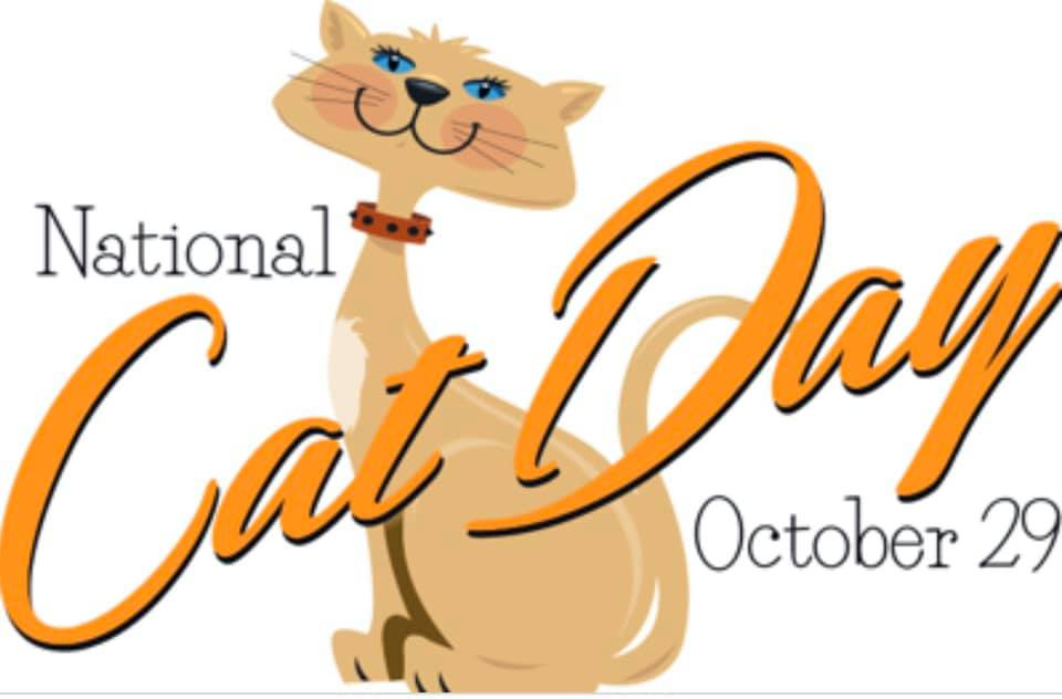 National Cat Day Wishes pics free download