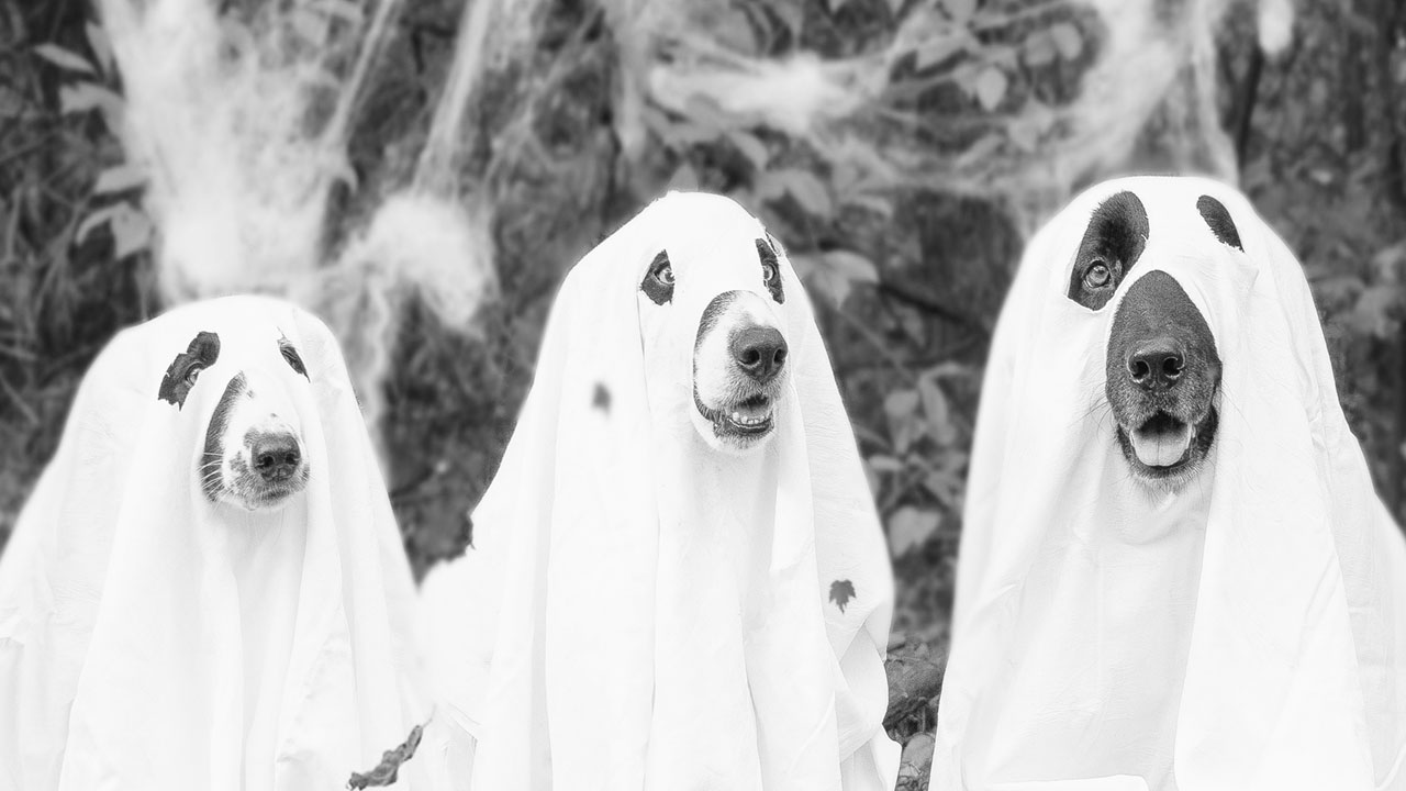 Do You Believe In Ghost Dogs