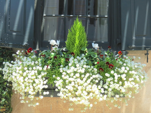 charleston window box boxes easy to maintain show stopper