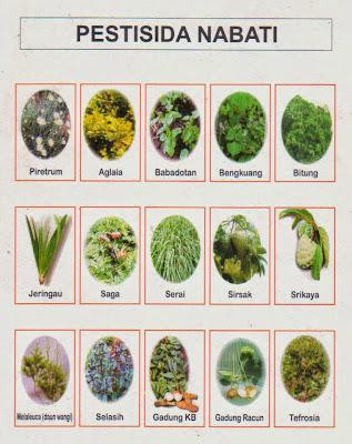 Pestisida Nabati untuk Skala Rumah Tangga