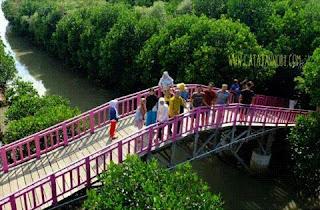 Rekomendasi Tempat Wisata Brebes Jawa Tengah Terbaru Untuk Liburan Di Hutan Mangrove