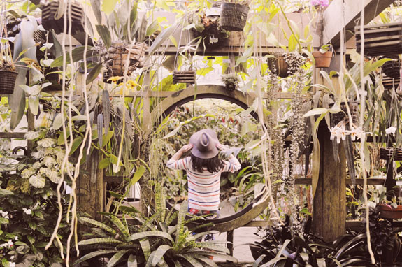 San Francisco Bucket List - get lost among the tropical flowers and fauna inside the Conservatory of Flowers