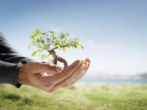 Imagen de un árbol sobre unas manos