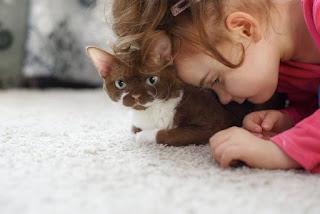3 razones por la que los gatos son grandes compañeros para niños con autismo