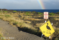 Nene crossing warning sign – End of Chain of Craters Road – HVNP, Big Island – © Denise Motard