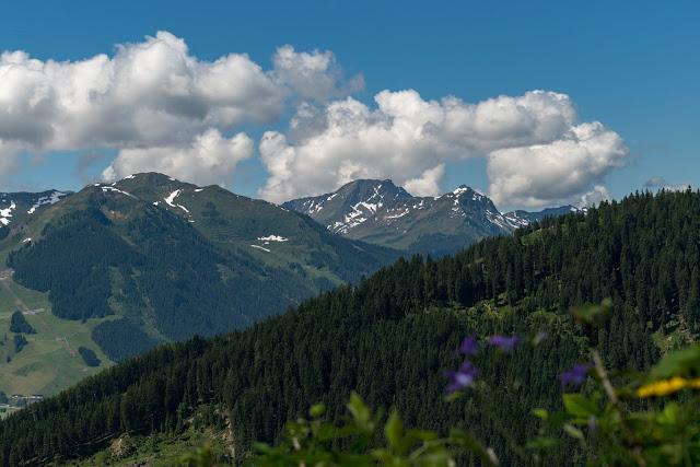 Waldwandern in Saalbach | Wanderung zu den Waldteichen am Maisereck | Saalbach - Maisalm - Wirtsalm - Waldteiche - Spielberghaus - Saalbach | Wandern-SalzburgerLand 04