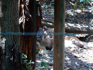 Parco Gallorose(ガッロロゼ公園)動物写真