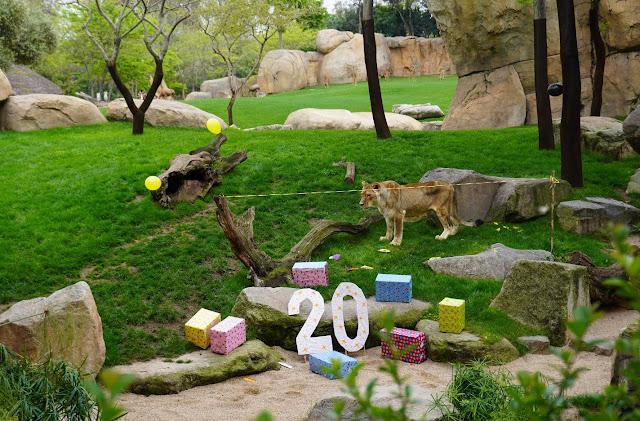 20 cumpleaños leona Fa
