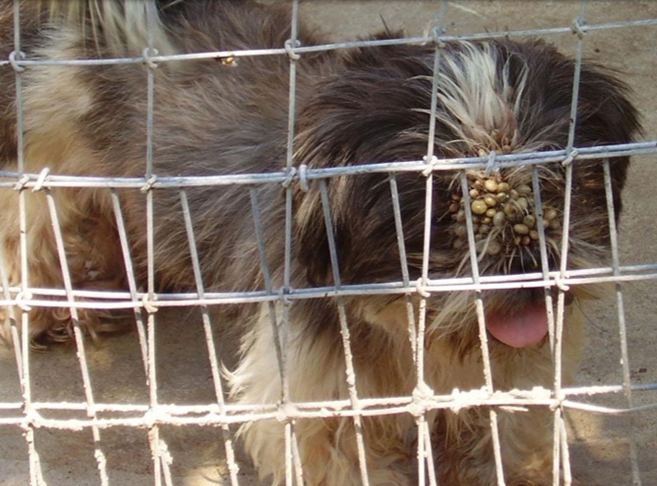 Ticks on dogs eyelids