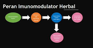 Peran Imunomodulator Herbal