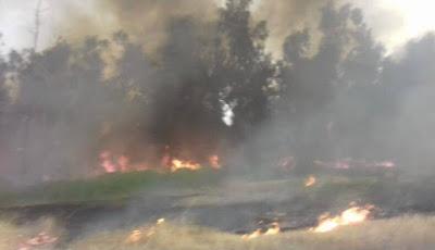 الثاني خلال أيام.. اندلاع حريق في غابات الموصل