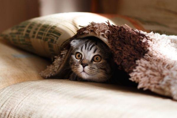 tips memilih selimut